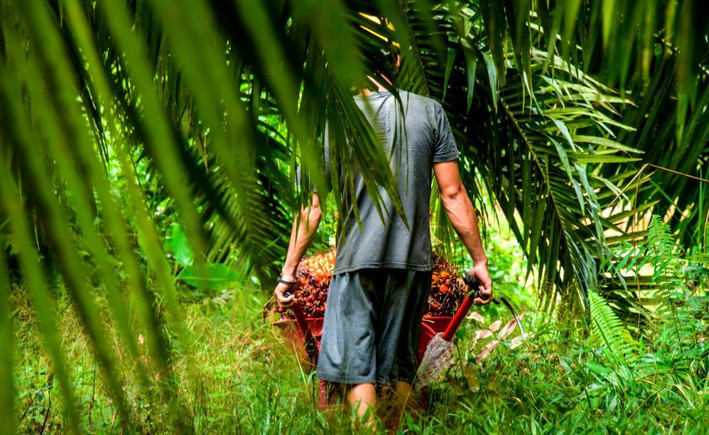 palm oil women